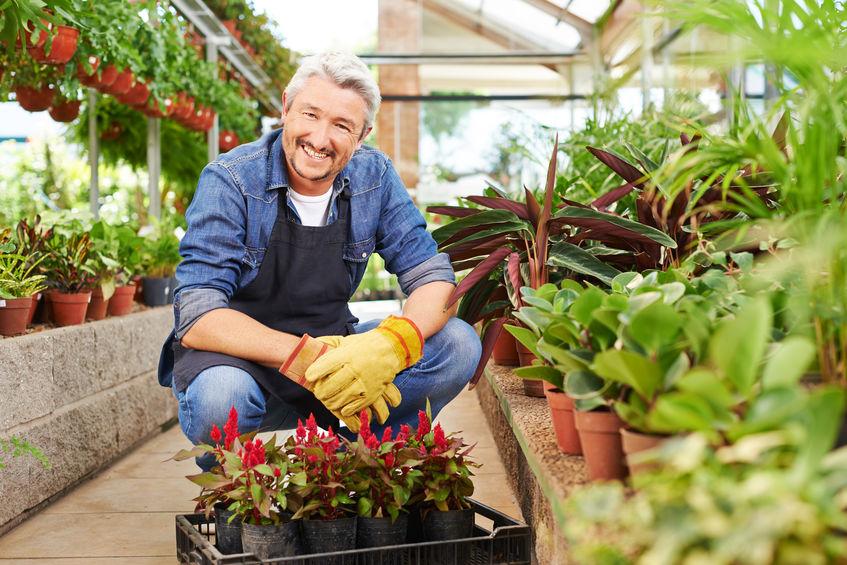 Pflanzenshop, Online Pflanzenshop